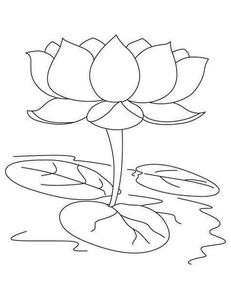 disegni fiore di loto disegni da colorare fior di loto stabile gratuito