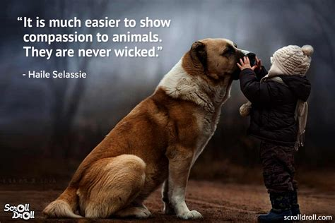 animal quotes animal quotes and sayings