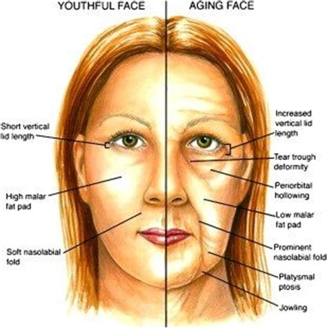 7 Ways To Skin Ageing by Anti Aging Tips Top 6 Anti Aging Herbs Best Anti Aging