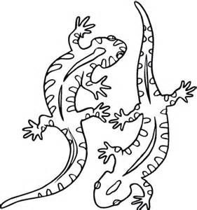 salamander outline salamander 21 coloring page free printable coloring pages