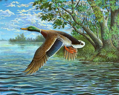 17 best images about painting ducks on pinterest old duck in flight 4500x6300 animals ducks geese