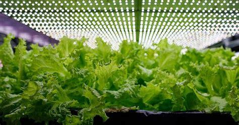Pupuk Ab Mix Alami tentukan jenis lu yang sesuai untuk berkebun hidroponik