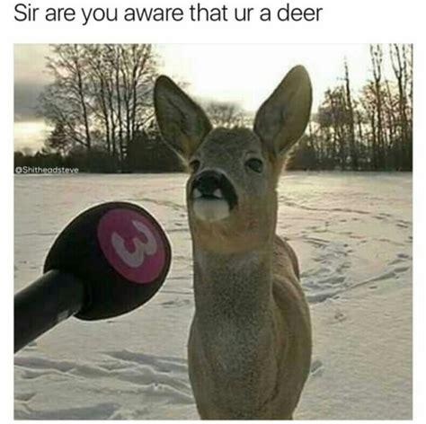deer memes deer meme