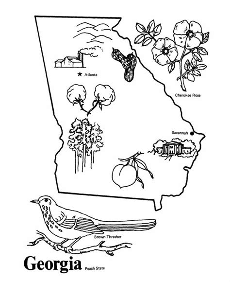 georgia state symbols coloring pages coloring pages