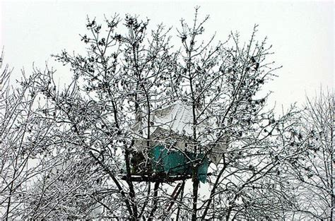 Treehouse Plans For Kids - snowy treehouse hometreehome treehouses pinterest treehouse tree houses and treehouses
