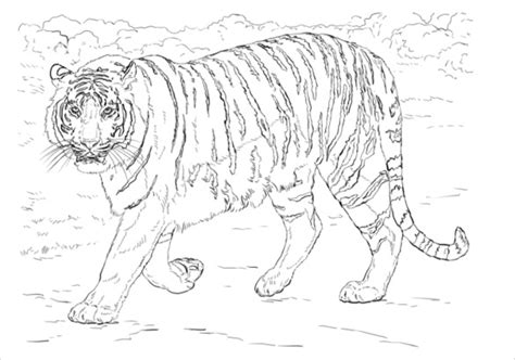 coloring pages of animals pdf animal coloring pages 25 free psd ai vector eps