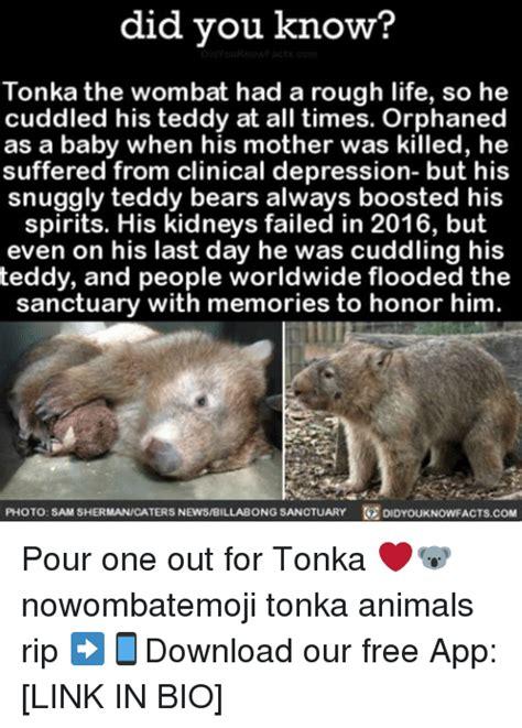 Wombat Memes - search wombats memes on me me
