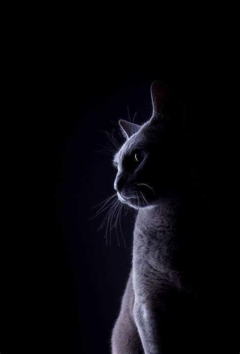 cat wallpaper hd iphone 10 idee 235 n over ios 7 achtergronden op pinterest