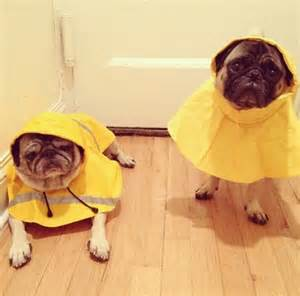 pug raincoat 17 best images about on models reindeer and holidays