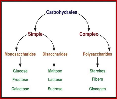 carbohydrates organic compound carbohydrate metabolism
