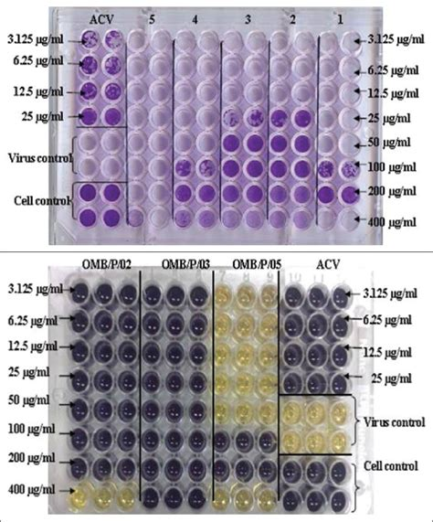 mtt test mtt cell proliferation assay protocols mtt assay of