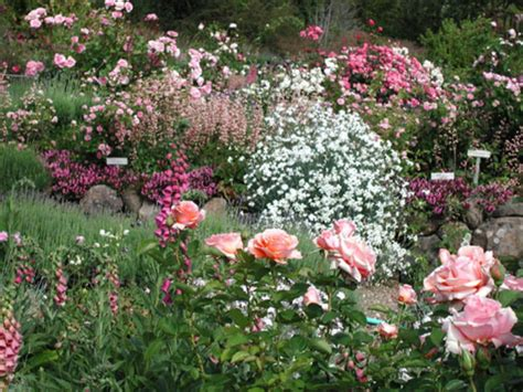 backyard rose gardens rose garden ideas pictures native garden design