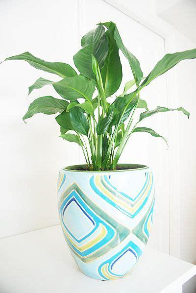 benefits of houseplants the breathtaking benefits of houseplants houseplant