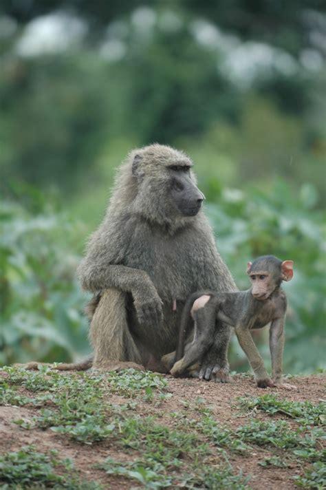 mole national park tamale ghana contact phone address