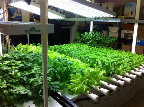 best indoor garden system aquaponics