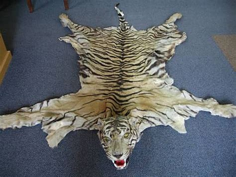 real tiger rugs for sale the gallery for gt real tiger skin rug for sale