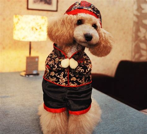 new year clothes for dogs buy pet clothes of new year