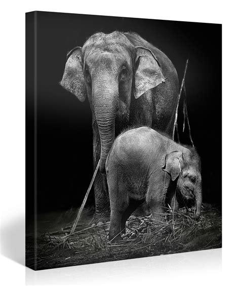 bodenfliesen schwarz weiß pin schwarz wei 195 elefanten tiere hd wallpapers 1920x1280