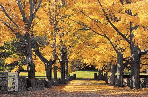tree farms near appleton 14 amazing places to see fall foliage