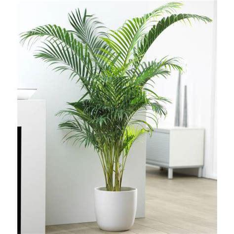 Plante Verte Intérieur by Areca Le Palmier Facile Pour Les Int 233 Rieurs Lumineux