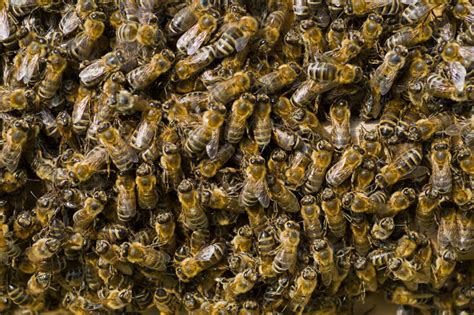 Modern Bedroom by Hive Containing 35 000 Bees Found In Brooklyn Bedroom