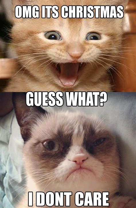 Cat Christmas Memes - grumpy cat quotes funny pictures quotes memes jokes