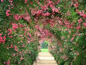 Pictures Of Beautiful Flowers In A Garden Garden Hd Wallpapers Wallpaperscharlie