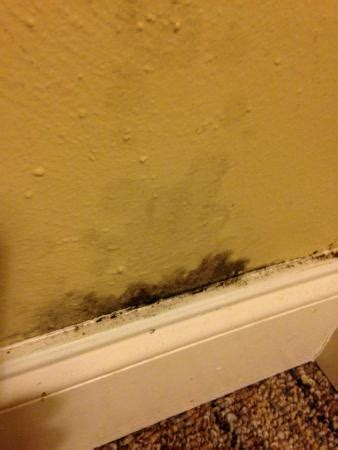 Bedroom Wall Has Mould Black Mold On Bedroom Wall Picture Of Rodeway Inn