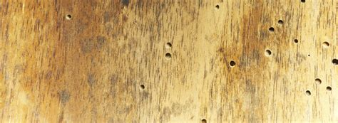 signs of bed bugs in wood furniture insectes xylophages comment savoir