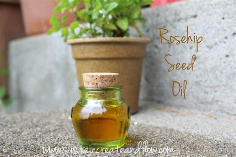 Rosehip Seed Shelf by What You Need To About Rosehip Seed