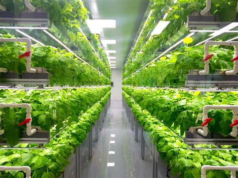 vertical farming  compact spaces types  farming