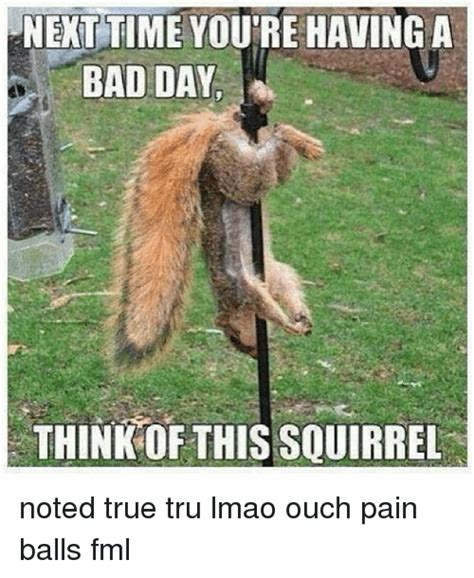 Having A Bad Day Meme - next time youre having a bad day think of this squirrel noted true tru lmao ouch pain balls fml