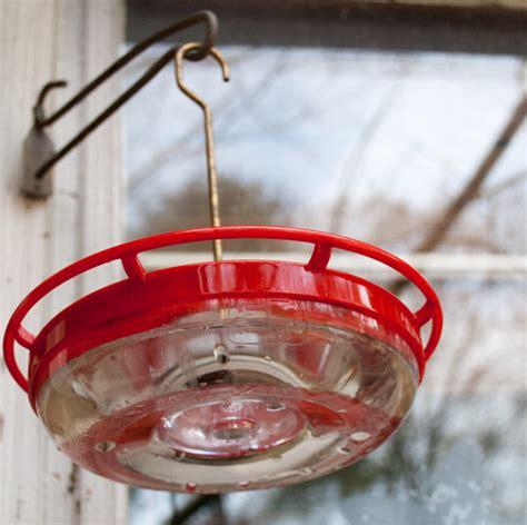 putting up hummingbird feeders birdseed binoculars