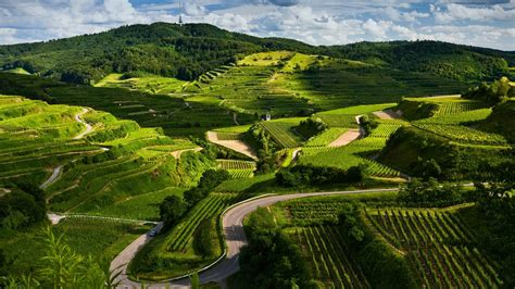 wallpaper green view nature green fields labyrinth picture nr 60893