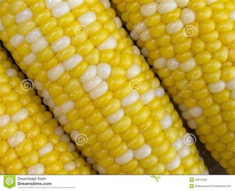 colors of corn bi color corn royalty free stock image image 25014456
