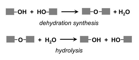 draw diagrams to illustrate condensation and hydrolysis reactions deffernces between hydrolysis and dehydration sythesis