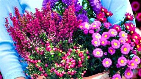Wie Bepflanze Ich Meinen Garten 3104 by лето на исходе пора менять растения для балконов и терасс