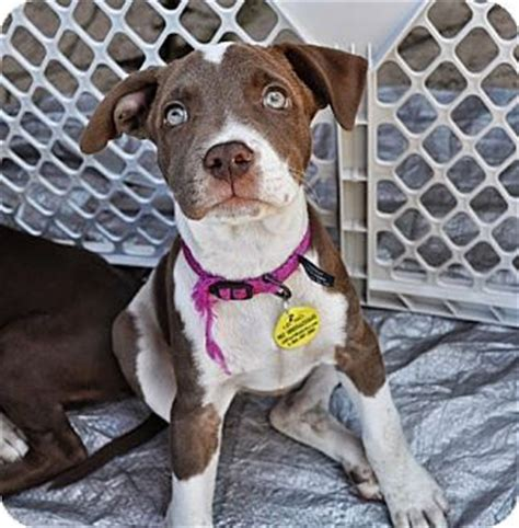 adoption sacramento ca 17 best images about adoptable dogs in sac ca on adoption cas and