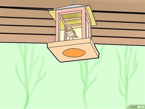 tenere lontano i gatti dal giardino 4 modi per tenere i gatti lontani dal giardino