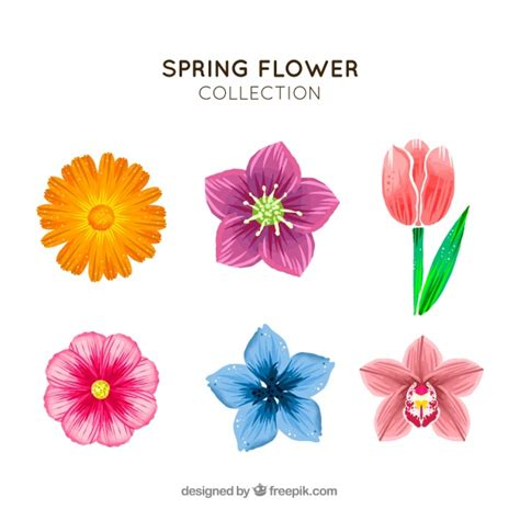 Flower Collection flower collection vector free