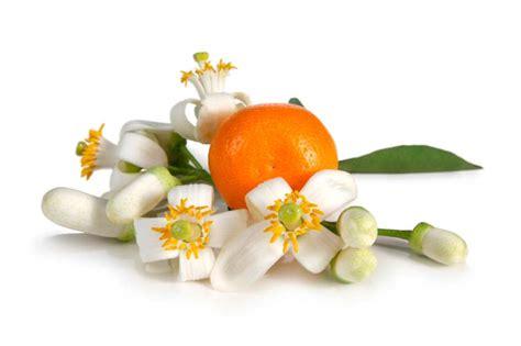 essenza fiori d arancio l olio essenziale di neroli e i suoi benefici
