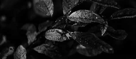 negro el color rey dise 241 o acromatico uso del color negro en la web