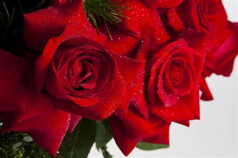 imagenes flores colombianas conhe 231 a a rainha das flores as rosas colombianas