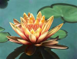 Lotus Flower On Water Mandalas The Of Paul Heussenstamm