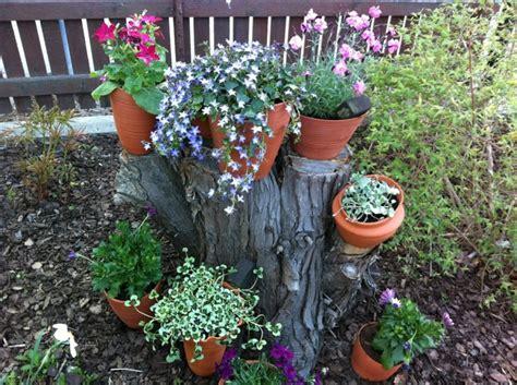 imagenes de jardines con troncos flores bonitas que no deben faltar en el jard 237 n