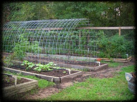 wire for climbing plants wire tunnel for climbing plants this idea