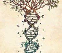 tree dna image 1390480 by awesomeguy on favim com tree dna image 1390480 by awesomeguy on favim com