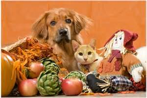 dogs thanksgiving thanksgiving safety tips for your pets