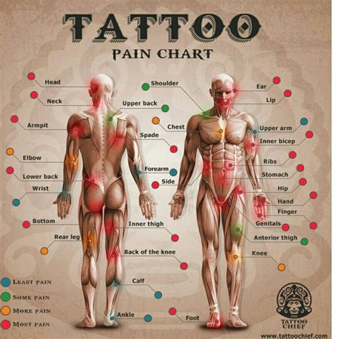 female tattoo placement chart tattoo pain chart rib tattoos a tattoo tatoos tattoo pain