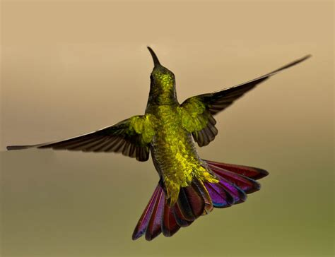 back view a different hummingbird from yesterday i ve